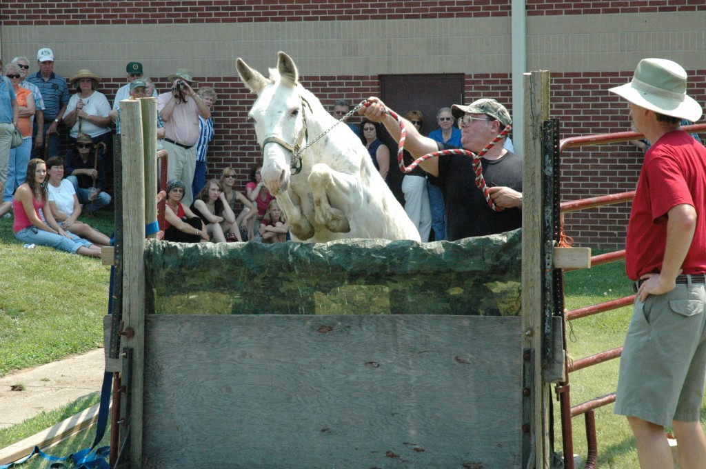 2007 Festival - Mule Jump Demo (11)