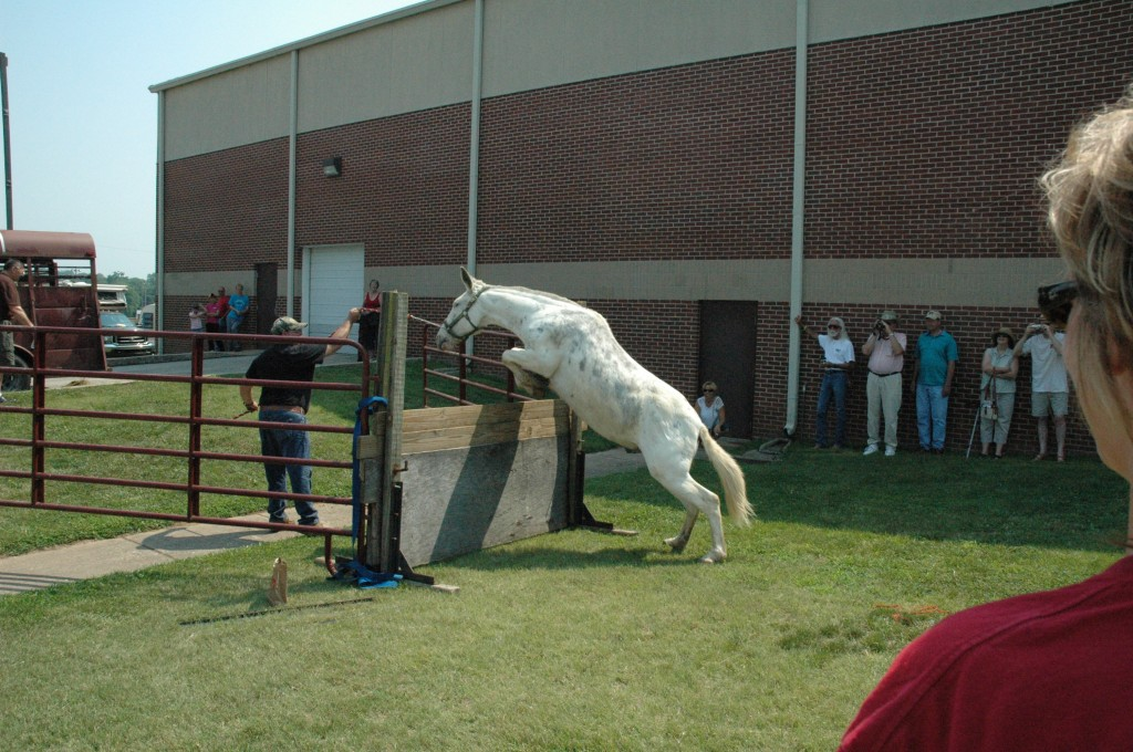 2007 Festival - Mule Jump Demo (4)