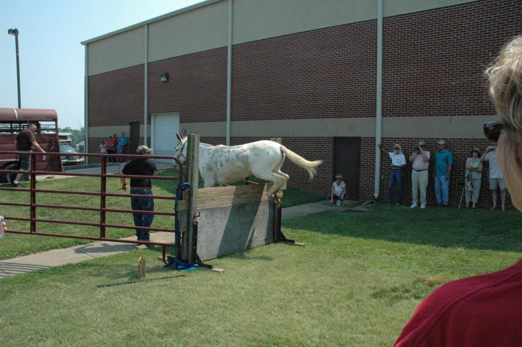 2007 Festival - Mule Jump Demo (5)