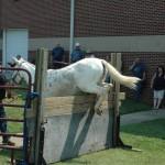 2007 Festival - Mule Jump Demo (8)