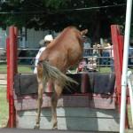 2008 Festival- Mule Jump