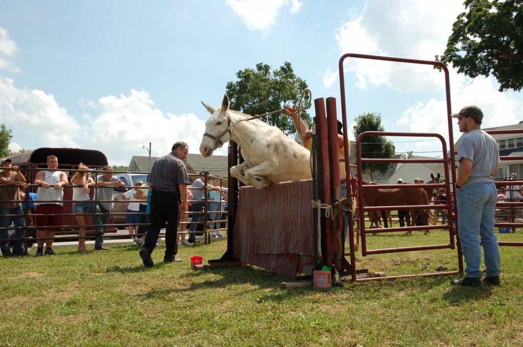 2009 Festival - Mule Jump (11)