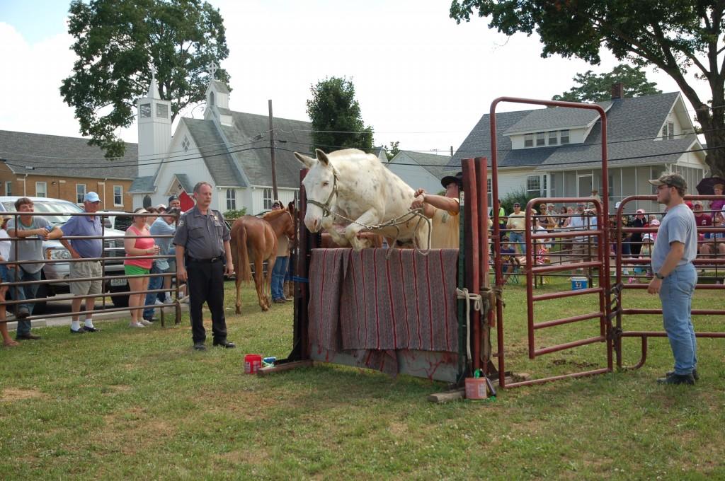 2009 Festival - Mule Jump (15)