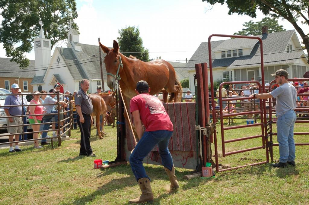 2009 Festival - Mule Jump (16)