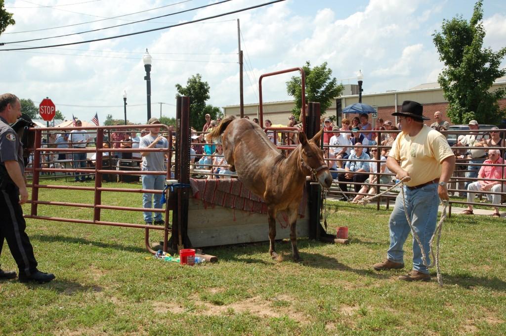2009 Festival - Mule Jump (2)