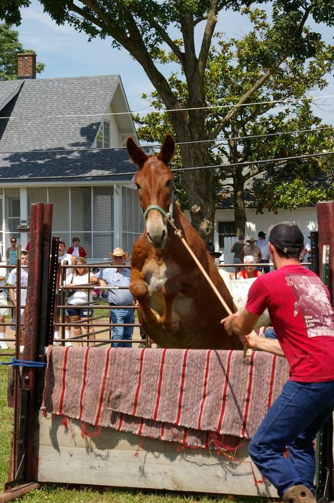 2009 Festival - Mule Jump (20)