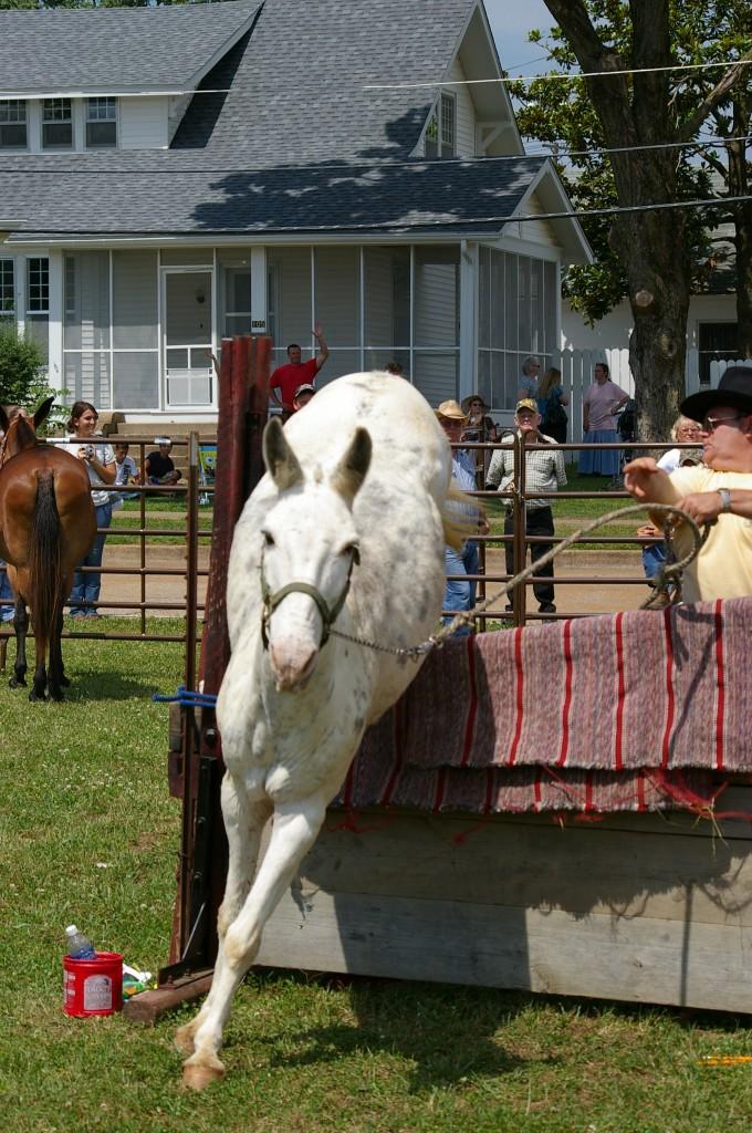 2009 Festival - Mule Jump (24)