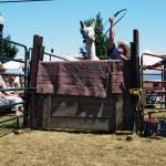 2010 Festival - Mule Jump