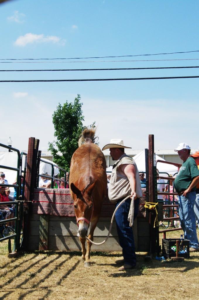 2010 Festival Mule Jump 2 (3)