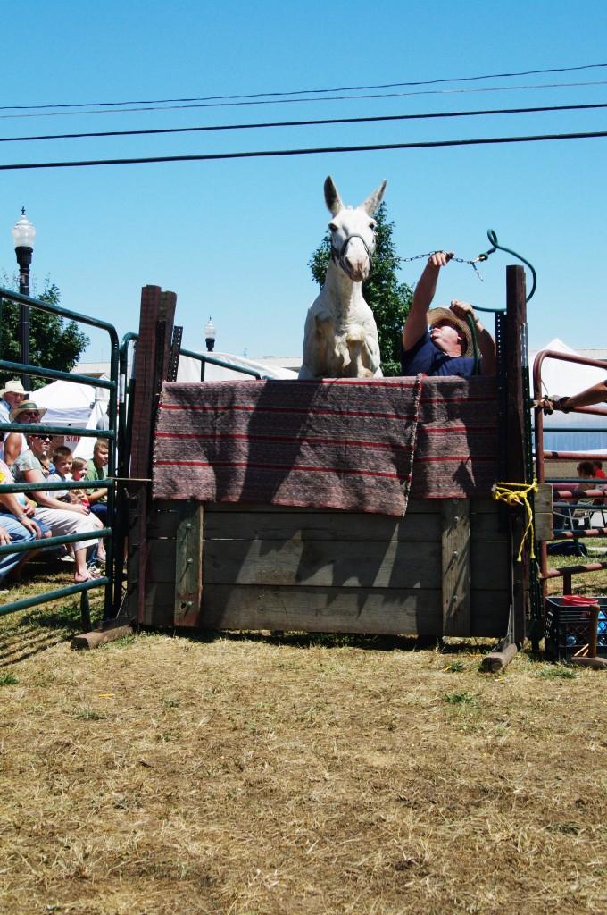 2010 Festival - Mule Jump (2)