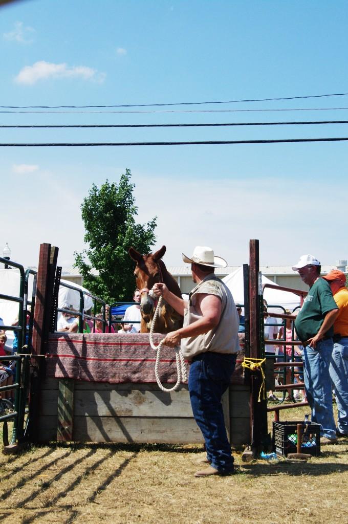 2010 Festival - Mule Jump 2