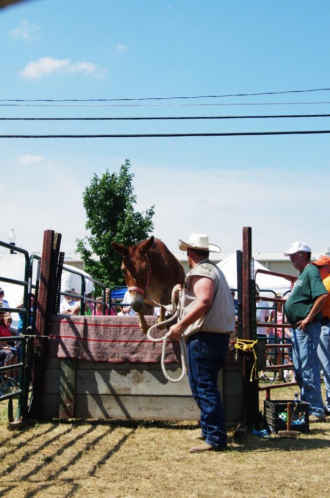 2010 Festival Mule Jump 2