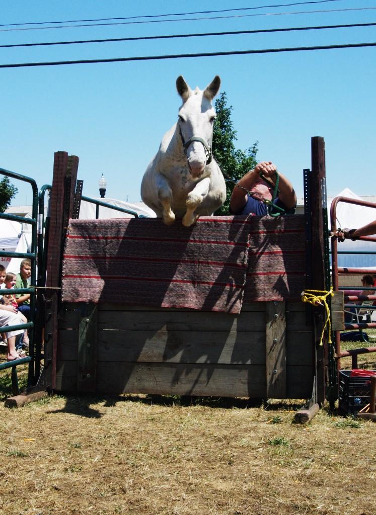 2010 Festival - Mule Jump (3)