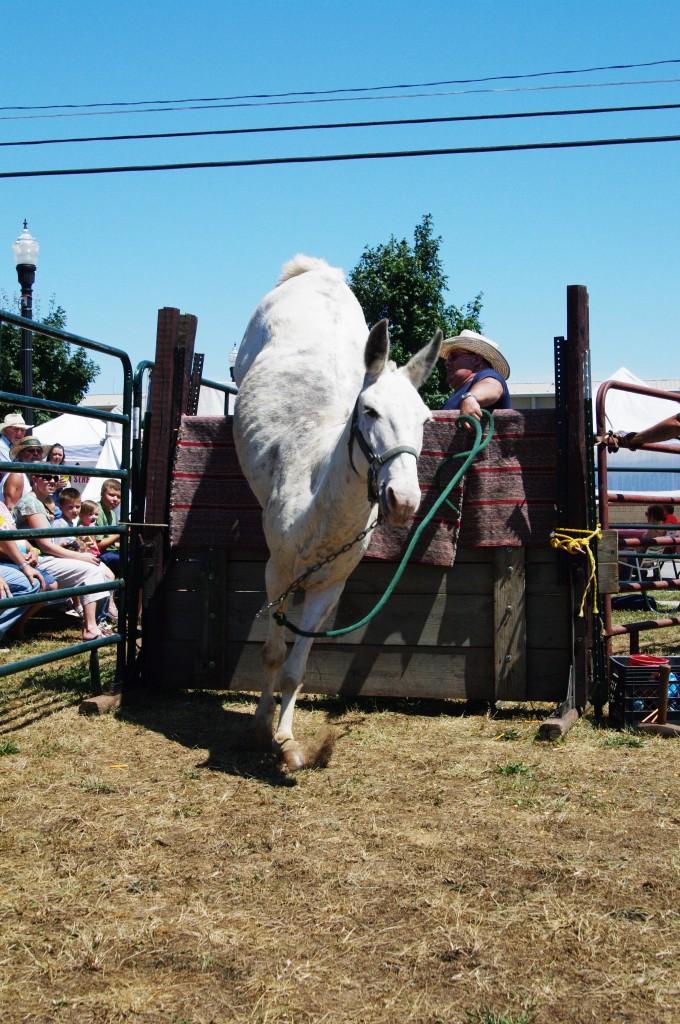 2010 Festival - Mule Jump (5)