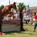 2011 Festival - Mule Jump