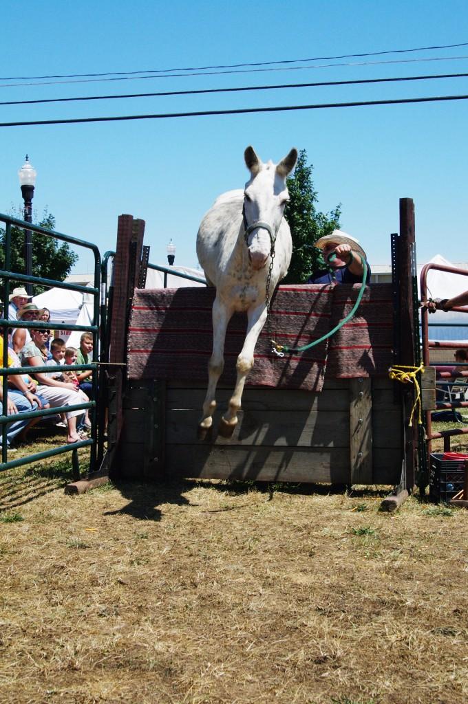 Mule Jump
