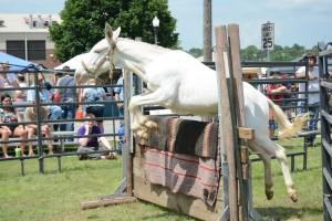 2014 Festival Mule Jump