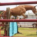 2018 Fest. Mule Jump5