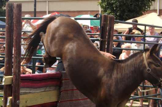 2012 Festival - Mule Jump