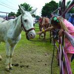 mule jump 1 (KL)